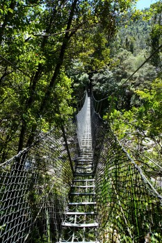 Jungle bridges