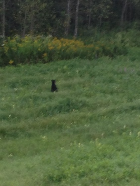 BB bear.